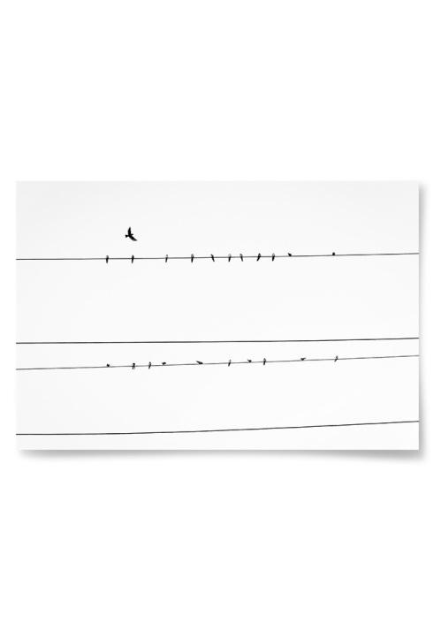 Poster Fåglar på Ledning