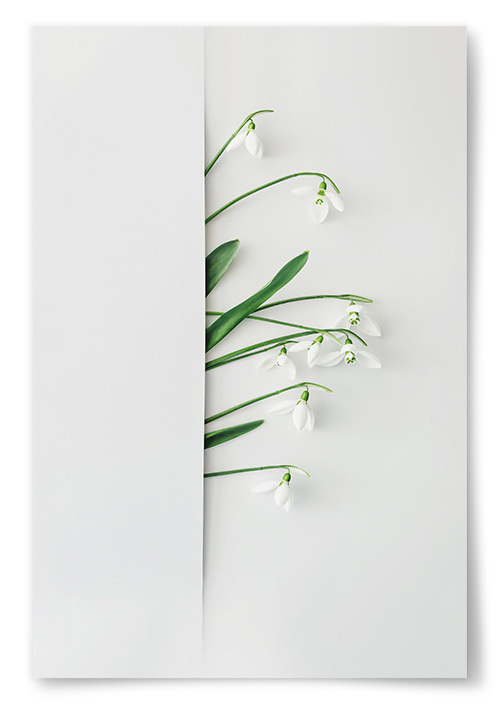 Poster Snödroppar Konstfoto