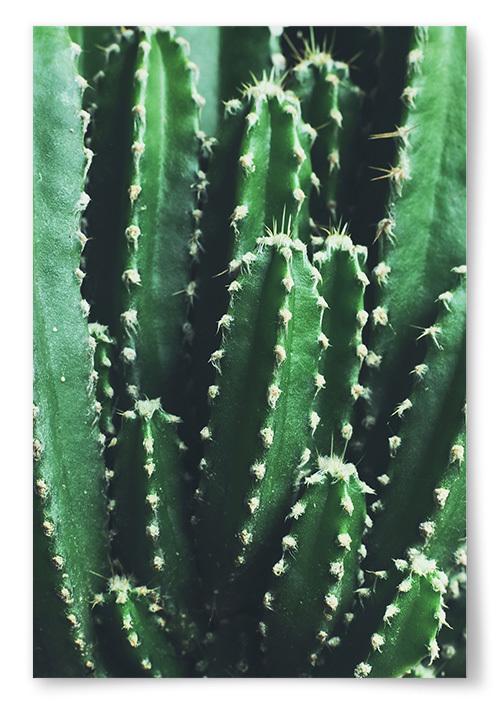 Poster Kaktus Foto