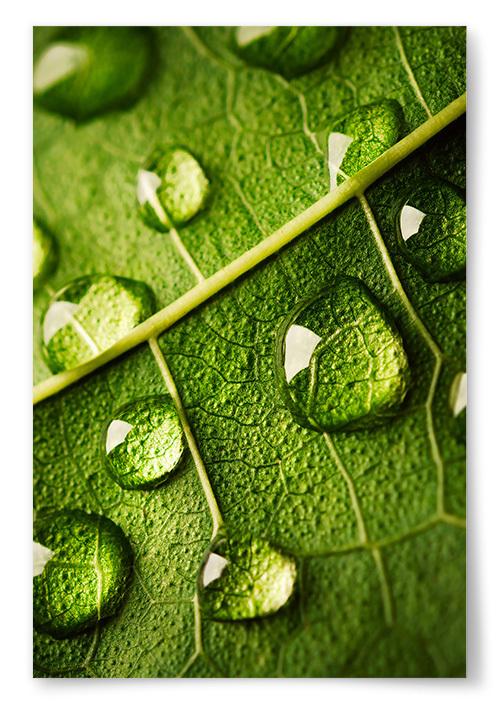 Poster Vattendroppar På Löv Närbild